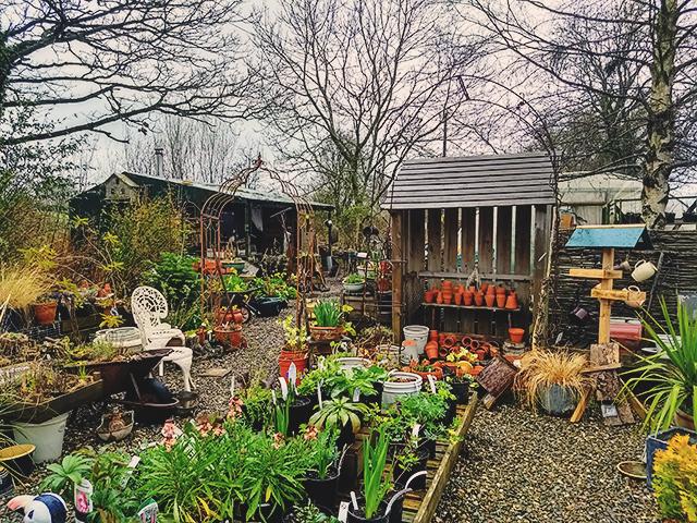 plant nursery Shropshire