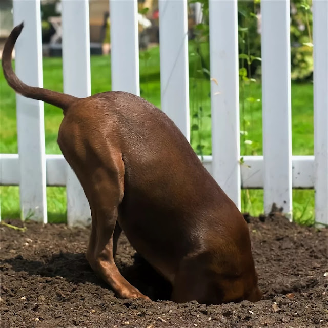 Why Do Dogs Dig Holes? What Are They Looking For?