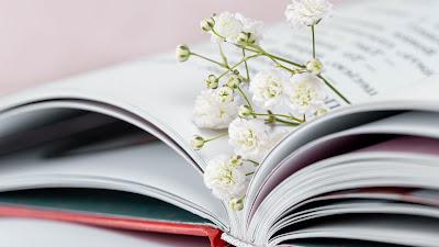 Gypsophila flower wallpaper on book