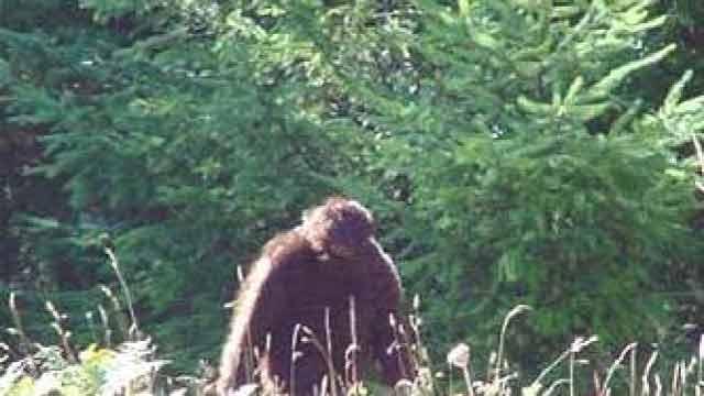 kemunculan Bigfoot atau Sasquatch