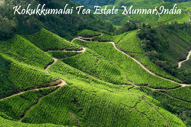 Munnar Attractions : Kokukkumalai Tea Estate Munnar