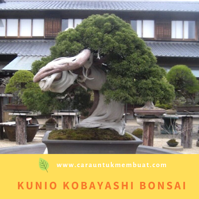 Kunio Kobayashi Bonsai