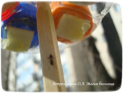 кормушка для насекомых, поделка из пластиковых бутылок, крышек, муравей