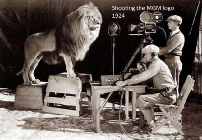 60 Iconic Behind-The-Scenes Pictures Of Actors That Underline The Difference Between Movies And Reality - This one is unbelievable; it is the shooting of the original MGM logo shot from 1924.