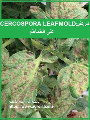 مرض الورقة السوداء CERCOSPORA LEAF MOLD على الطماطم