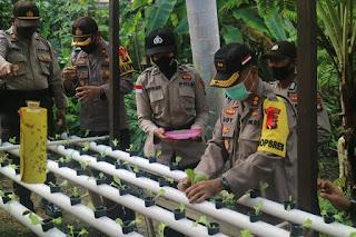 Jaga Ketahanan Pangan, Polres Lingga Budidaya Lele, Hidroponik, dan Berkebun Jagung