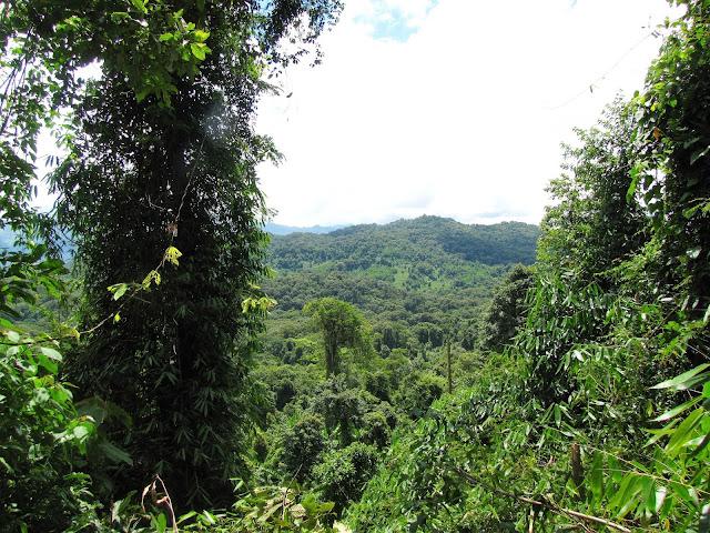 mountain nam et phou louey national protected area laos