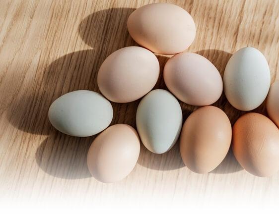 mengenali ciri telur infertil