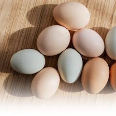 Mengenali Telur Infertil dan Bahayanya untuk Kesehatan
