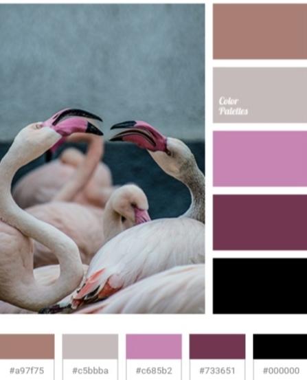 Color Palete BwithRenata