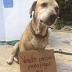 ΓΙΑ ΝΑ ΠΛΗΡΩΣΕΙ ΤΗΝ ΧΗΜΕΙΟΘΕΡΑΠΕΙΑ ΤΟΥ! Τι έκανε ένας σκύλος...