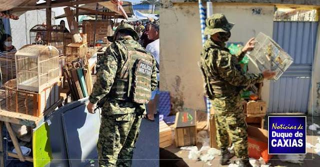 Polícia ambiental apreende animais silvestres em feira livre de Duque de Caxias