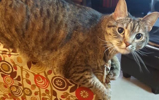 Meet Crypton Fabric, This Boho Kitty Mama's Home Decorating BFF