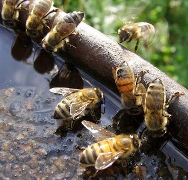 Dokumentární filmy pro včelaře