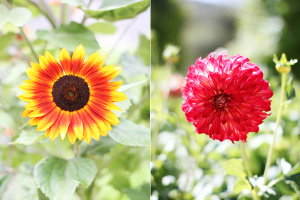 Bright blooms at Carmel Valley Ranch
