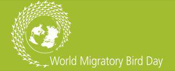 World Migratory Bird Day Wishes For Facebook