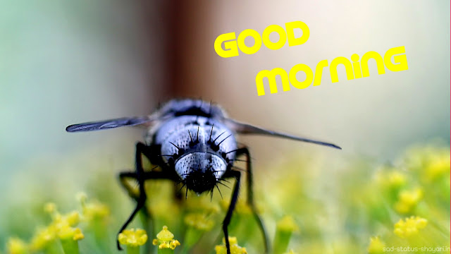 Good morning image honey bee