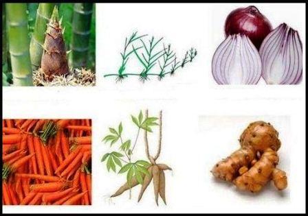 Perkembangbiakan alami tumbuhan