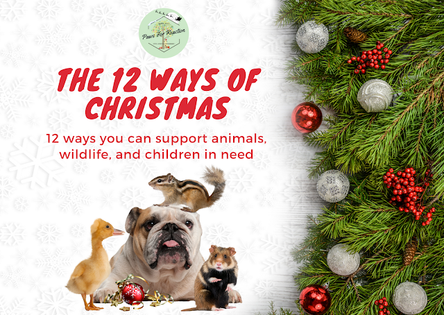 The 12 ways of Christmas: 12 ways you can support animals, wildlife, and children in need