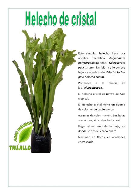 Flores% Helecho de Cristal