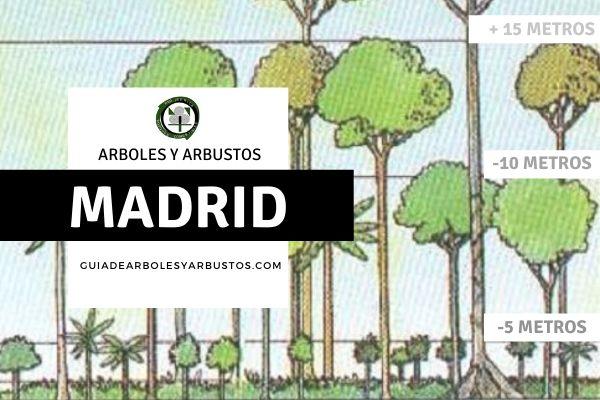 Arboles y arbustos de la provincia de Madrid, España, por estratos.