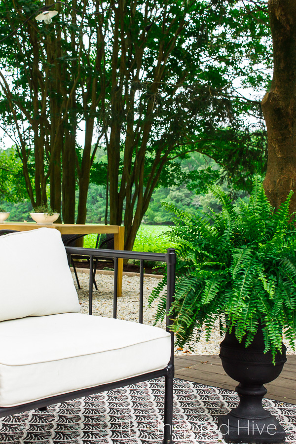 Outdoor sofa, fern, and teak dining table