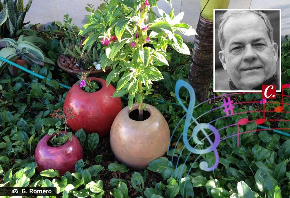 literatura paraibana regar plantas flores ouvir musica poesia flores jardim