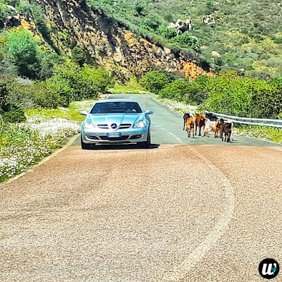 Sports car and the goats, driving | Sardinia, Italy | wayamaya