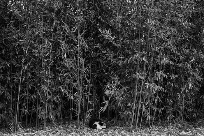gremlin in bamboo