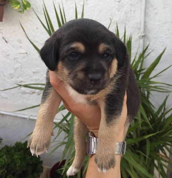 cachorros de talla pequeña 1