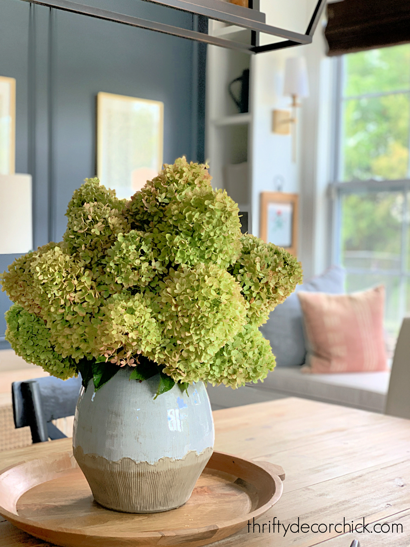 huge green and pink hydrangea blooms