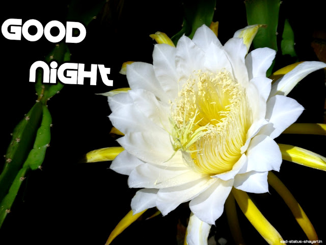 Good night images of flower