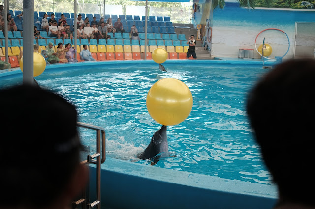 Saksikan Aksi Dolphine Di Dolphinarium Nemo, Phuket Thailand