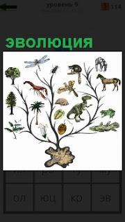 Показано древо эволюции, на котором изображены разные животные и растения