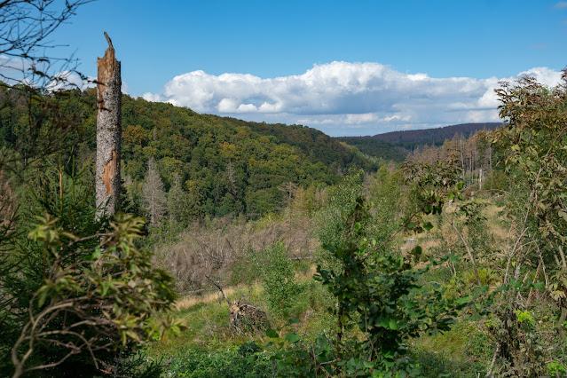 Drei-Täler-Tour und Stadtrundgang Bad Harzburg  Wandern im Harz  Eckerstausee - Radauwasserfall 20