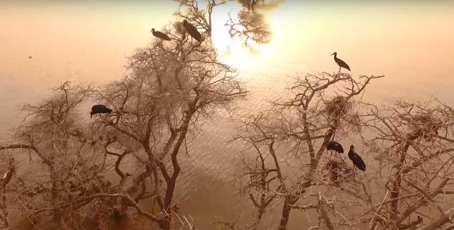 صور  السودان - خزان جبل اوليا - طيور تحط على الاشجار
