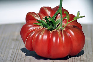 http://tomatprat.blogspot.no/2016/03/purple-calabash-tomat.html