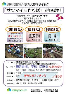 「サツマイモ作り隊」<②草取り7/7>