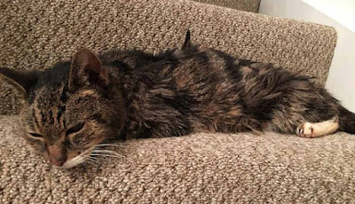 Kucing hilang selama 6 tahun