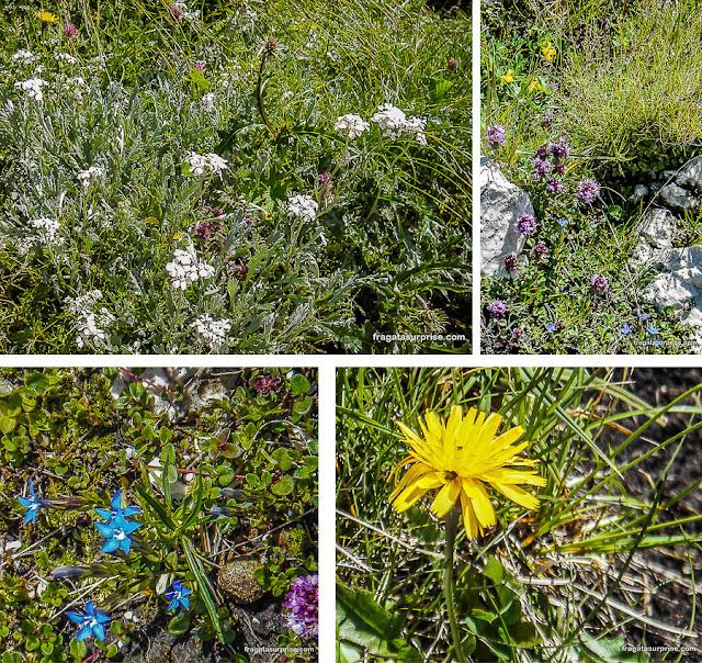 Flores no topo do Untersberg, Salzburgo