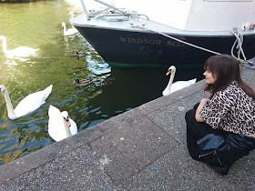 Laura is staring at some swans