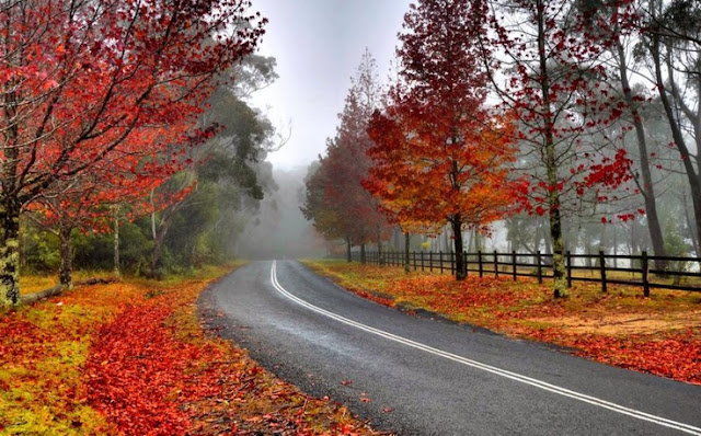 Autumn Di Breenhold Gardens, Mount Wilson, Australia