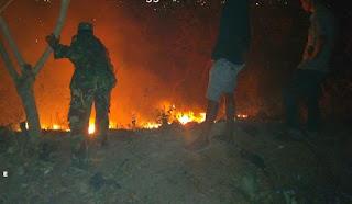 Hutan Jati Kumbe dan Rabadompu Timur Terbakar, Kodim Bima dan Damkar Bergerak Cepat