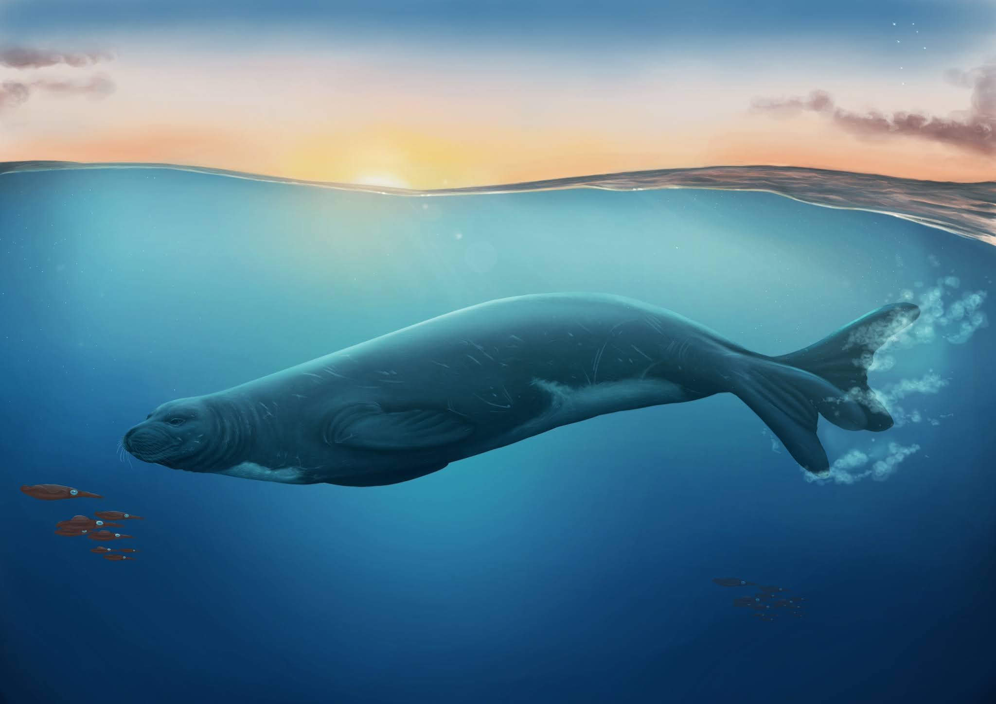 Eomonachus_belegaerensis-novataxa_2020-R