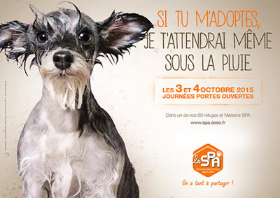 spa animaux a adopter