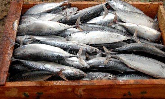 وصول أول كمية من السمك الموريتاني إلى تيندوف الجزائرية...