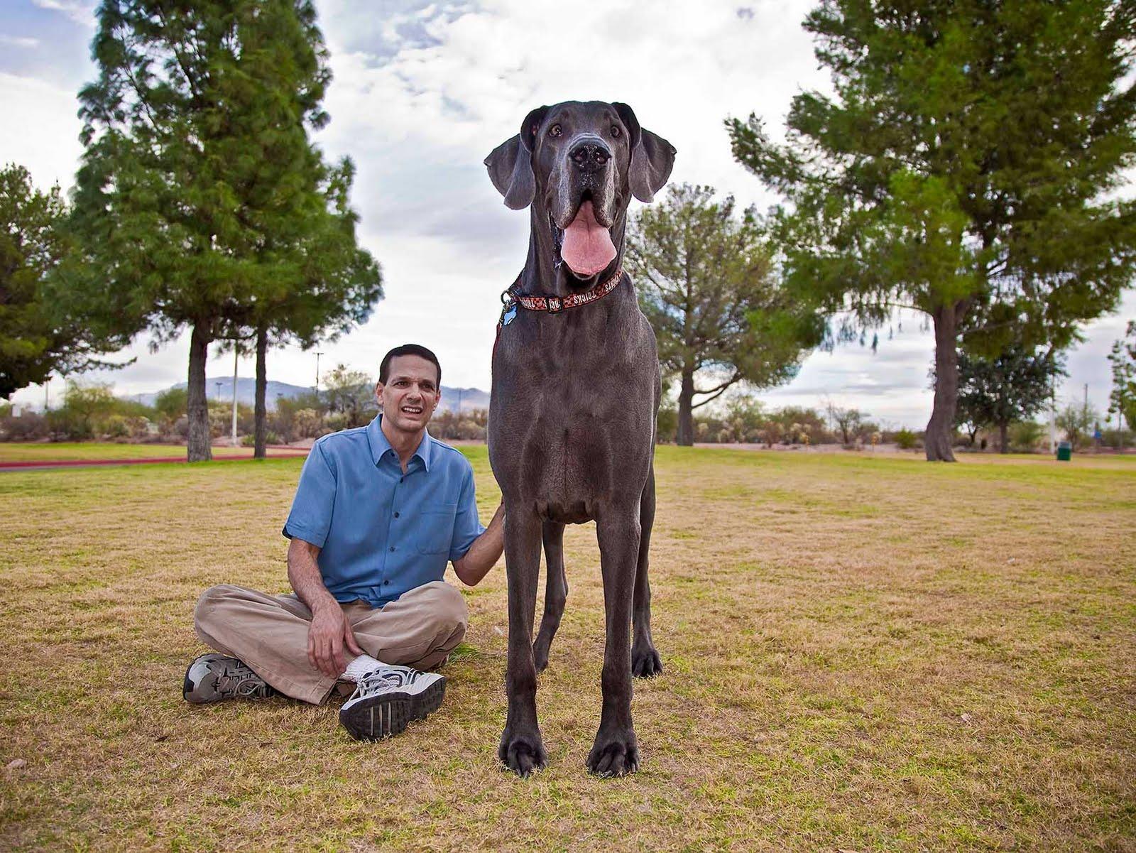Сами болшои хуи в мире, Самый большой хуй в мире трахнул суку 14 фотография