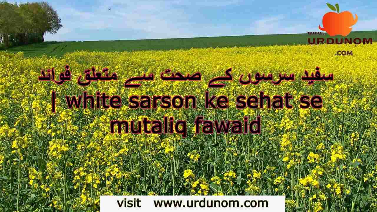 سفید سرسوں کے صحت سے متعلق فوائد   white sarson ke sehat se mutaliq fawaid