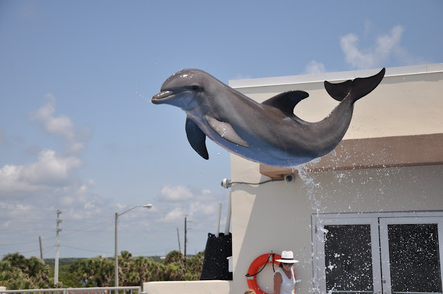 dolphin jumping at Marineland