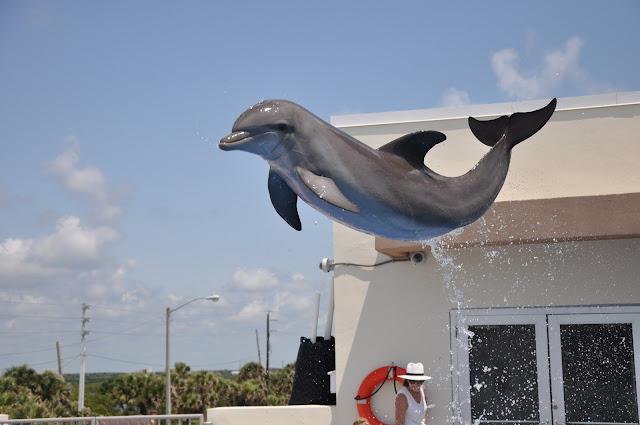 dolphin jumping at Marineland